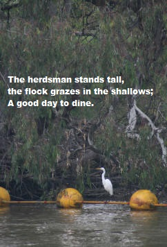 The herdsman stands tall, the flock grazes in the shallows; A good day to dine.